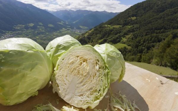 produkte-kraut-panoramablick-vinschgau-fb