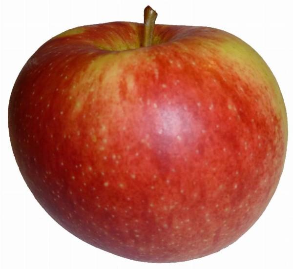 Dalinbel Apfelkiste Bio - VI.P